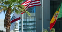 Flag of California near the palm tree in Los Angeles, 4K, RAW Stock Footage