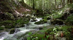 Mountines river in the forest Stock Footage