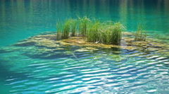 Eco concept green grass and blue water Stock Footage