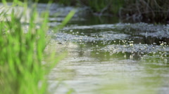 Water moving on lakeshore during sunny day Stock Footage