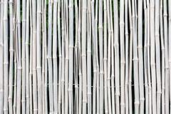 White bamboo fence texture background - stock photo