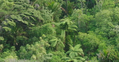 Native New Zealand bush in KareKare, Auckland, New Zealand Stock Footage