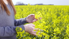 Person check rapeseed plant in time of blooming close up 4K Stock Footage