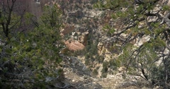 Grand Canyon North Rim, Cape Royal - stock footage