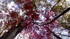 Autumn landscape in Gurye-si, Jeollanam-do Province, Korea Stock Footage