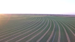 Aerial Shot of Alfalfa Field Stock Footage