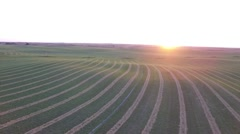 Alfalfa Field - Aerial View at Sunset Stock Footage