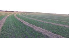 Slow Pan Across Alfalfa Field Stock Footage