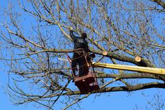 Pruning trees using a lift-arm Stock Photos