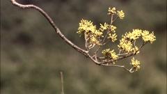 Spring Landscape in Gurye-si, Jeollanam-do Province, Korea Stock Footage