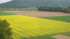 AERIAL: Beautiful big agricultural green wheat and yellow brassica rapa fields Stock Footage