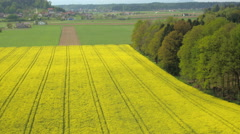 AERIAL: Cultivation of lush yellow oilseed rape field in countryside farmland Stock Footage
