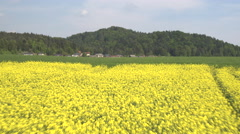 AERIAL: Lush yellow blooming oilseed rape and green wheatgrass field on farmland Stock Footage