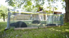 Little puppies inside small green fence outside 4K Stock Footage