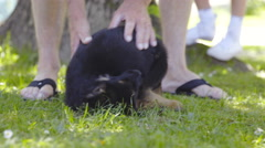 Person teasing puppy with hand in grass 4K Stock Footage