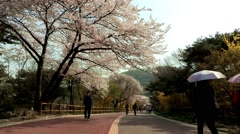 Landscape of Namsan Mountain in Seoul, Korea Stock Footage