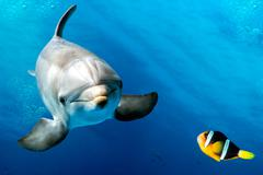 Dolphin underwater on reef background looking at you nemo and dori Stock Photos