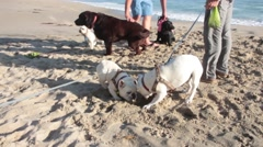 People with Dogs on the Beach Stock Footage