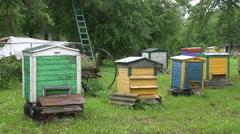 Rain falling on beehives Stock Footage