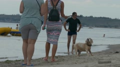 A walk with the dog - stock footage
