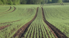 Sun shinning on young wheat field Stock Footage