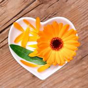 Homeopathy and cooking with calendula Stock Photos
