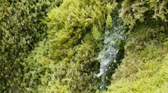Slow motion close-up of water stream on moss Stock Footage