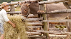 Boy feeding a donkey with hay on the farm - stock footage