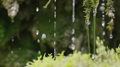 Slow motion close-up of water dribbling from moss Stock Footage