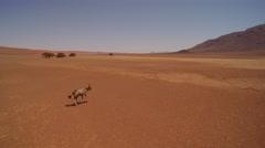 Oryx running across the arid plains of the Namib desert Stock Footage