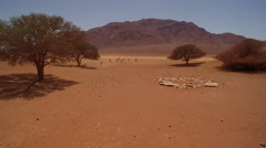 A herd of oryx are making their way through a red stone desert - Namibia Stock Footage
