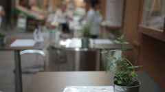 Ornamental sprig on an exterior cafeteria table, Bologna Stock Footage