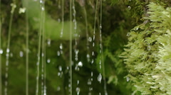Slow motion close-up of spring water dribbling from moss Stock Footage
