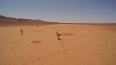 A herd of oryx are making their way through a red stone desert -Namibia - stock footage