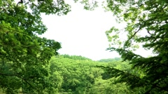 Landscape of Korea National Arboretum in Pochun-si, Gyeonggi-do Province, Korea Stock Footage