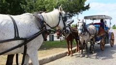 Fiacre phaeton, waiting horses Stock Footage
