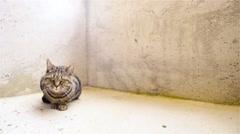 Cat inside concrete prison look around 4K Stock Footage