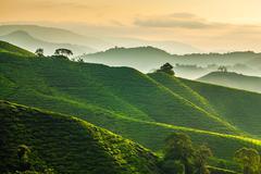 Misty morning at Cameron Highlands tea plantation overlooking layered hills - stock photo