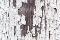 Old shabby wooden planks with cracked color paint - stock photo