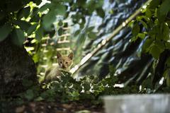 Little frightened kitten - stock photo