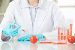 female scientist looking for gmo tomato dna for safety - stock photo