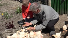 Grandfather and grandson feeding together baby chicken Stock Footage