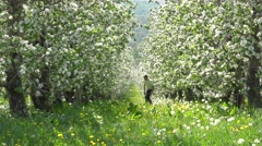 Father and son playing hide and seek in blossom orchard, childhood games, family Stock Footage