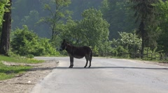 Cute donkey stay steady in the middle of the road, stubborn animal block passing Stock Footage