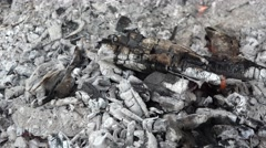 Extinguish the smolder fire coal with water Stock Footage