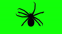 Fixed Spider on green screen, CG animated silhouette, looping Stock Footage