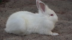 White bunny resting on ground Stock Footage