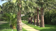 Alley through the palm trees, exotic holiday resort Stock Footage