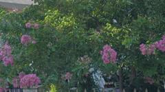 Blossom tree tilt up,building in blurred background,establishing shot by Sheyno. Stock Footage