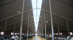 Livestock complex. animal farm Stock Footage